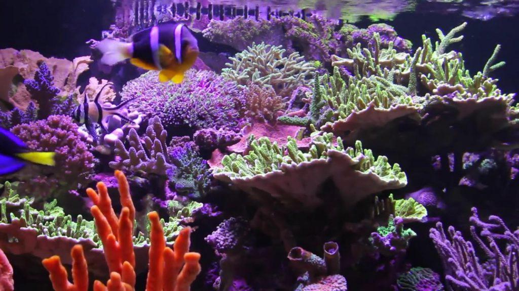 Saltwater_aquarium