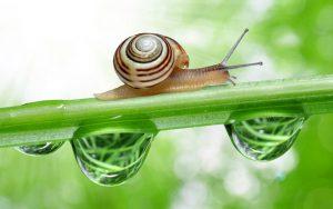 how long do snails sleep