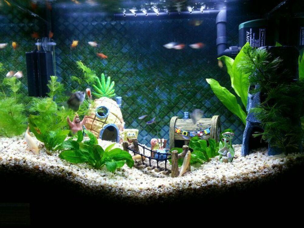 Setup The Best Spongebob Fish Tank Decorations