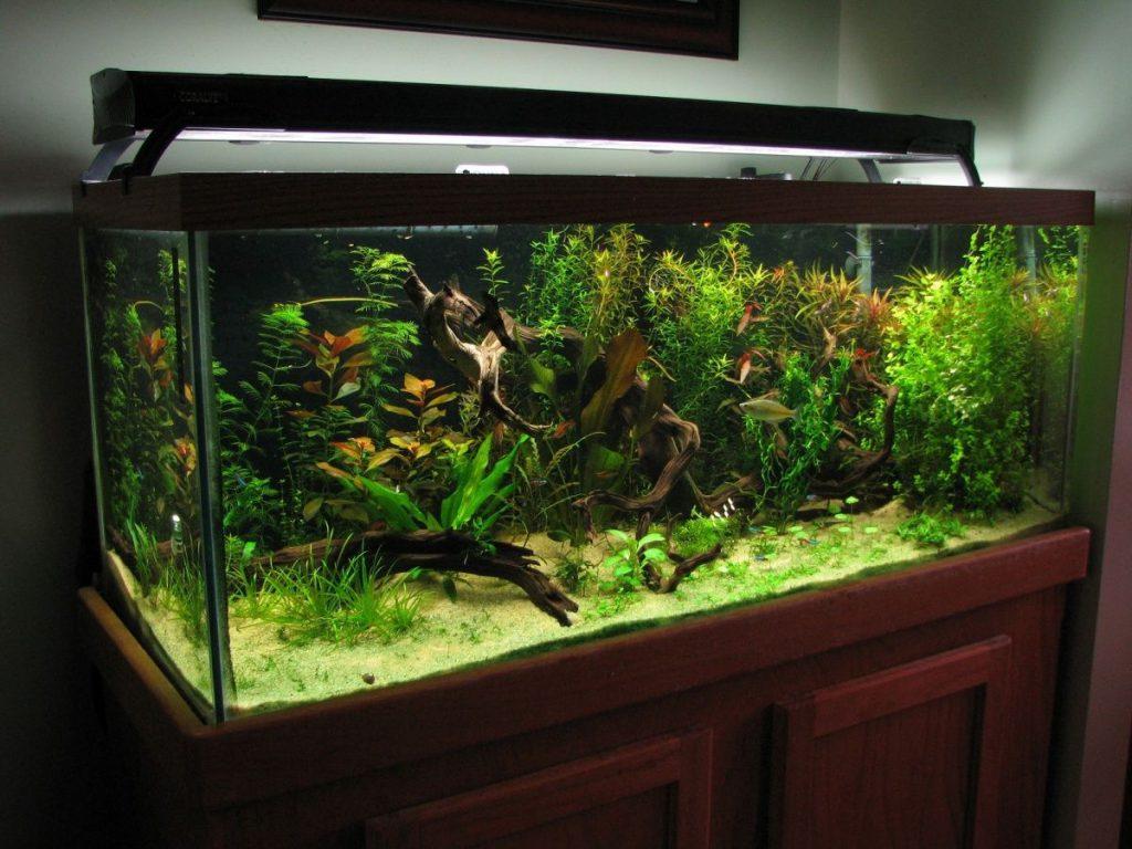 75_gallon_fish_tank