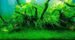 beautiful-java-moss