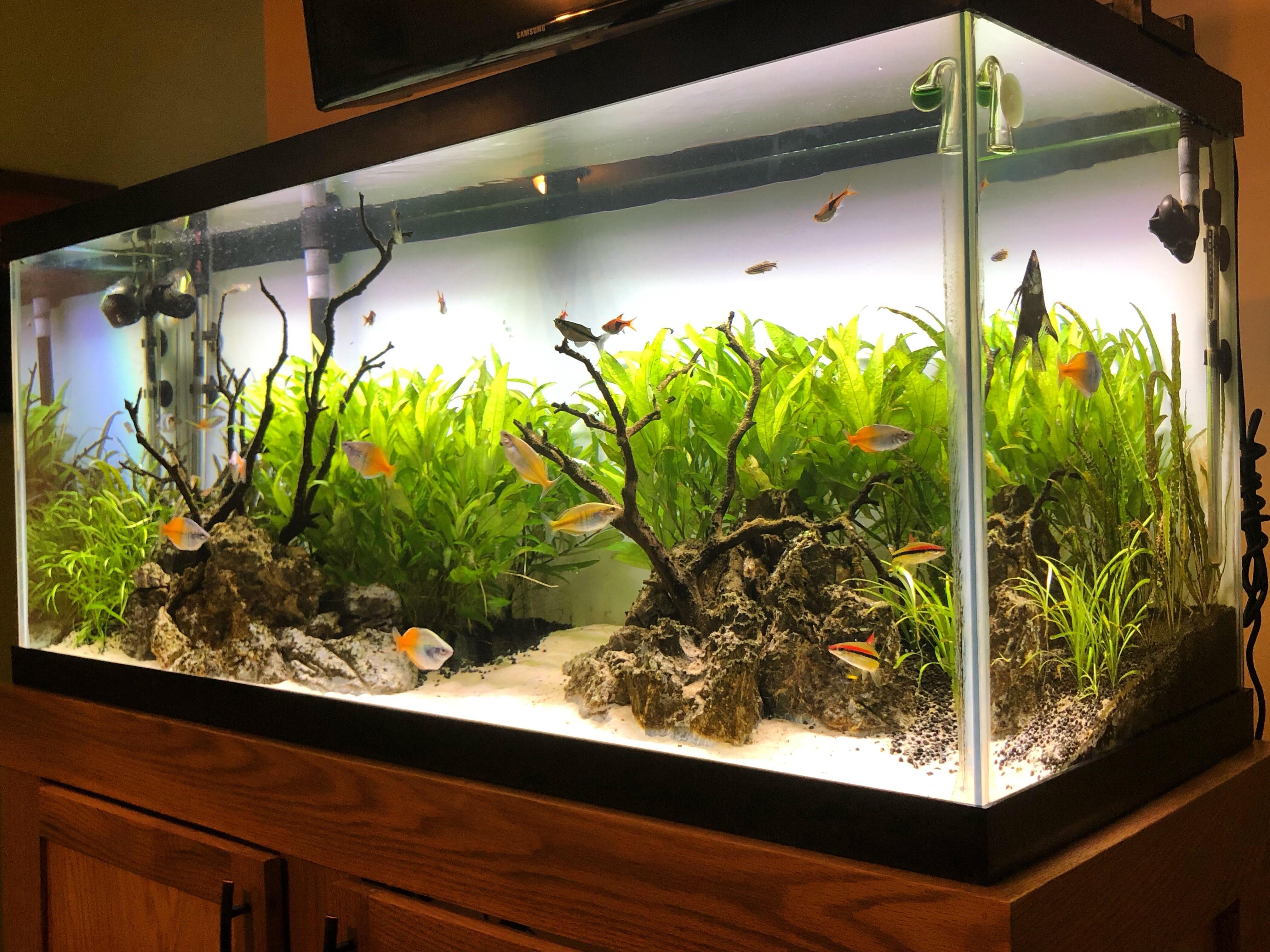 75_gallon_aquarium