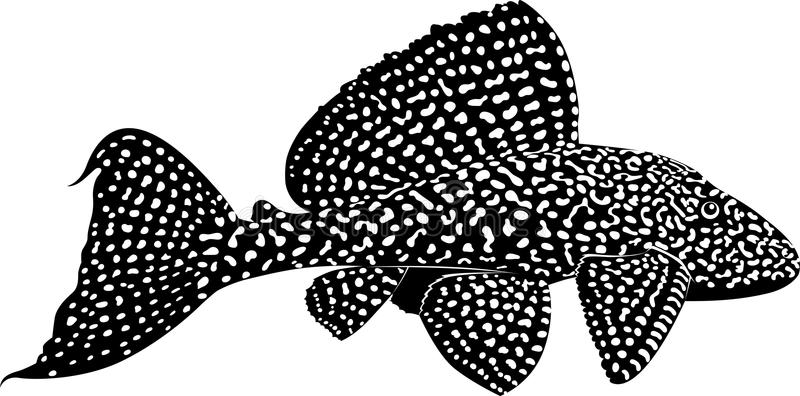 pleco_featured