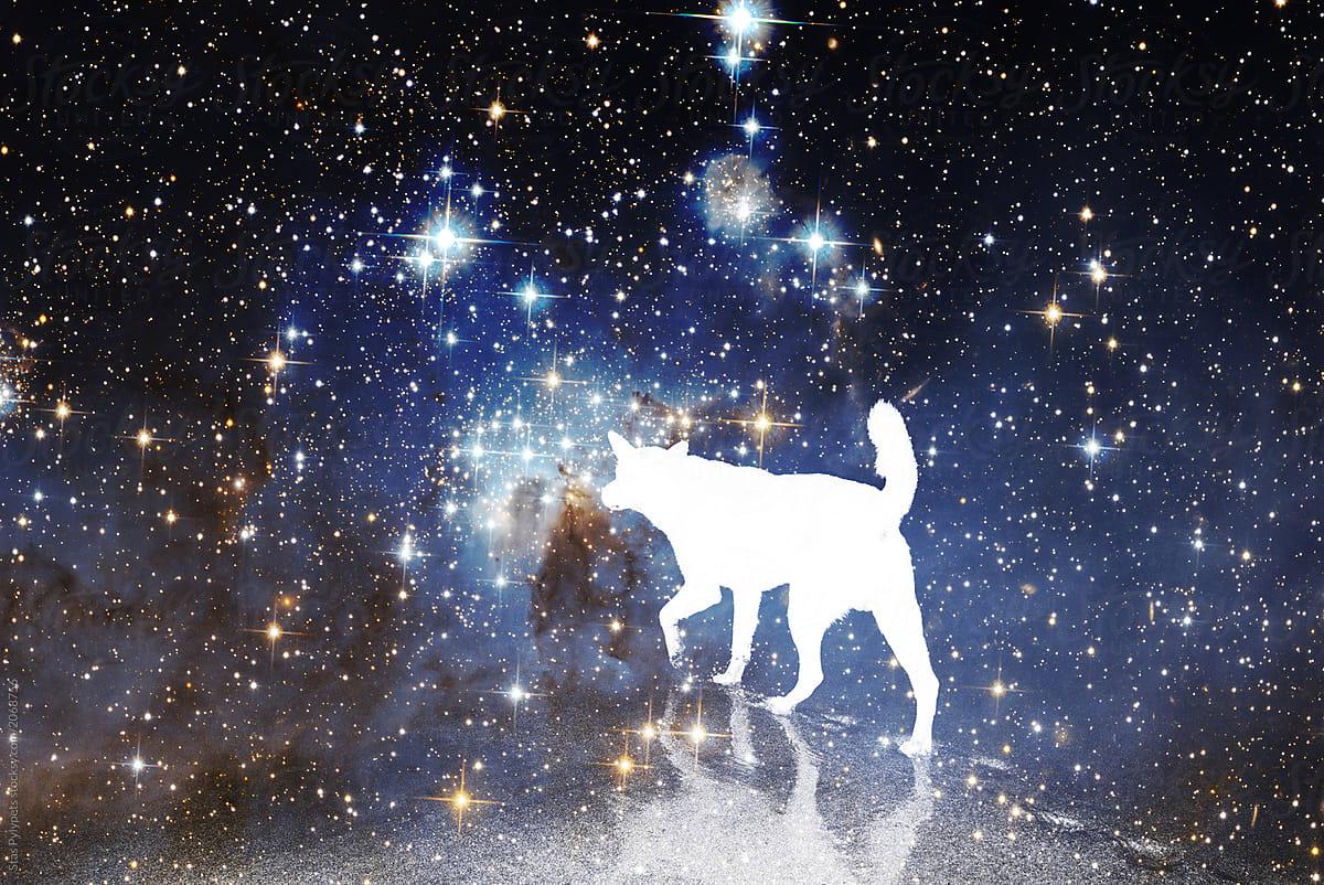 pet-hororscope-zodiac