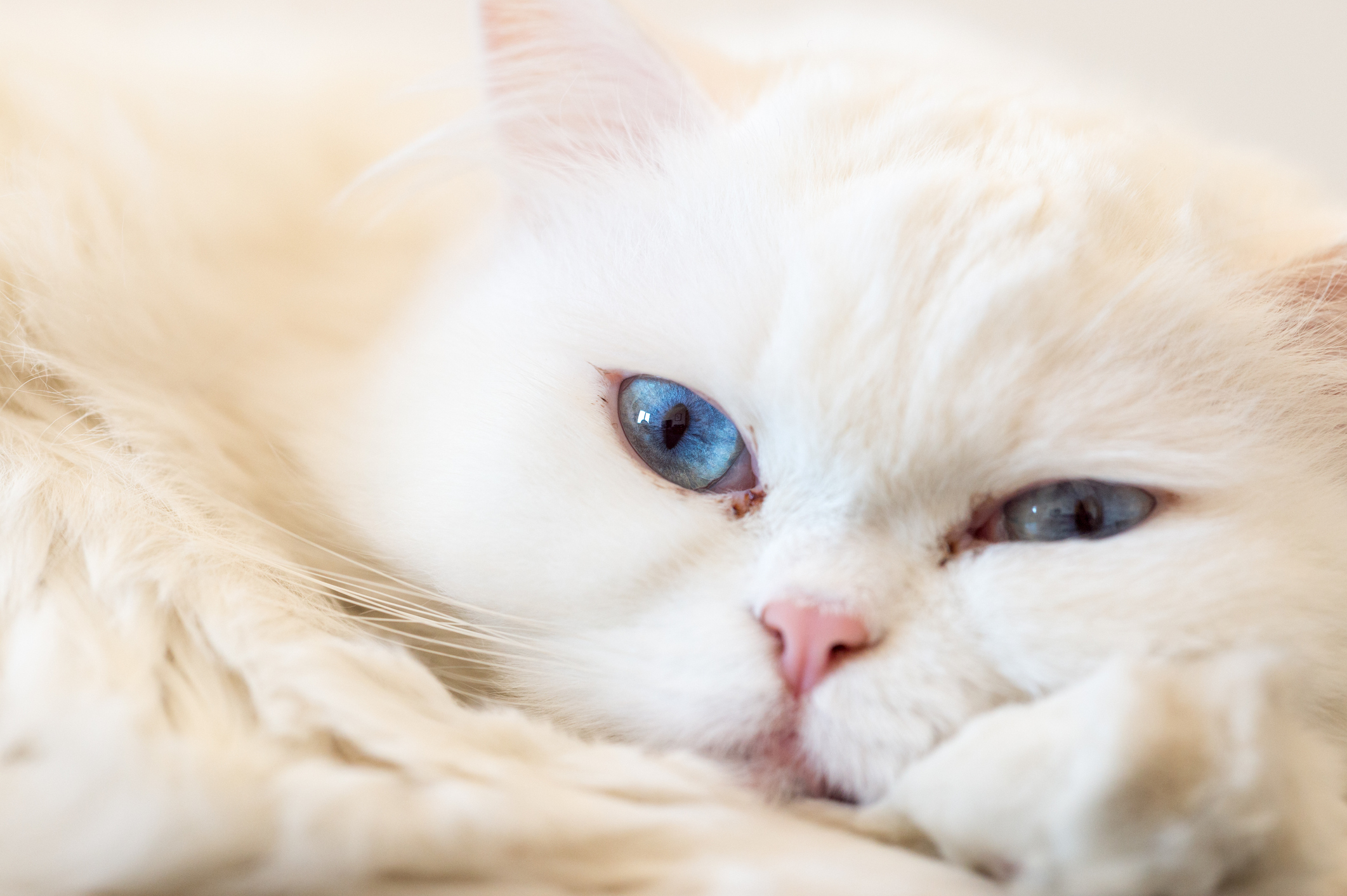 cat-Eye-problems-Inflammation
