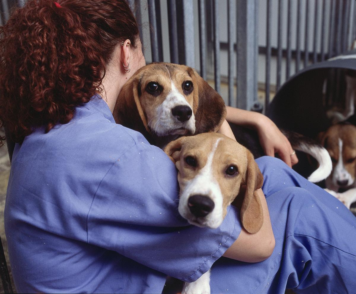Beagle-Dog-health
