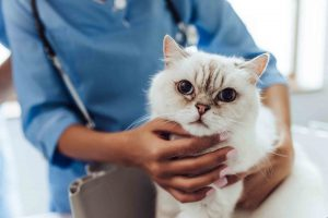 Cat Allergy Home Remedies