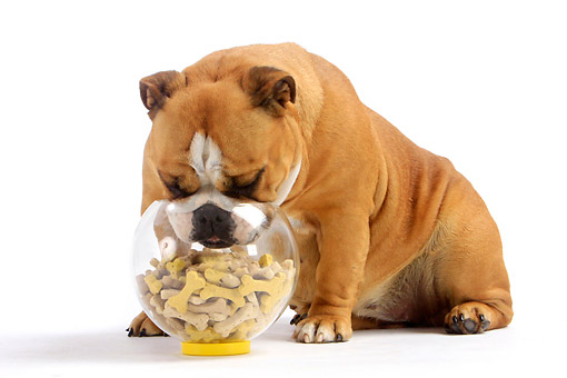 dog-biscuit-maker