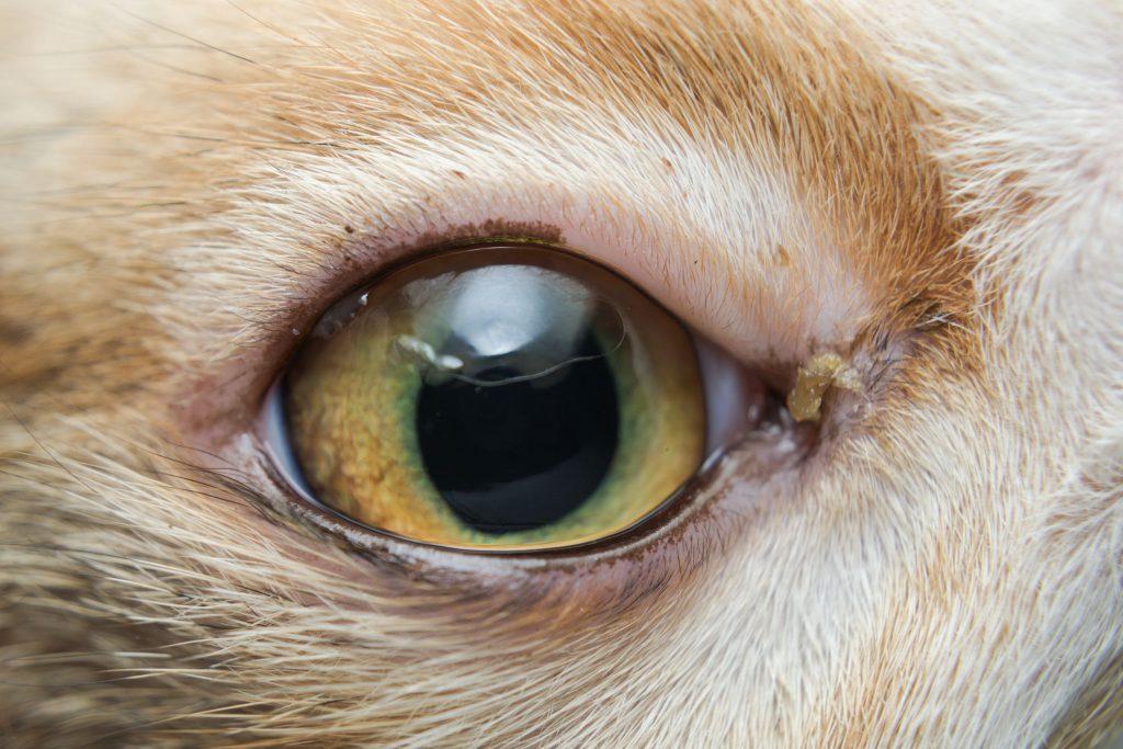 Conjunctivitis-eye