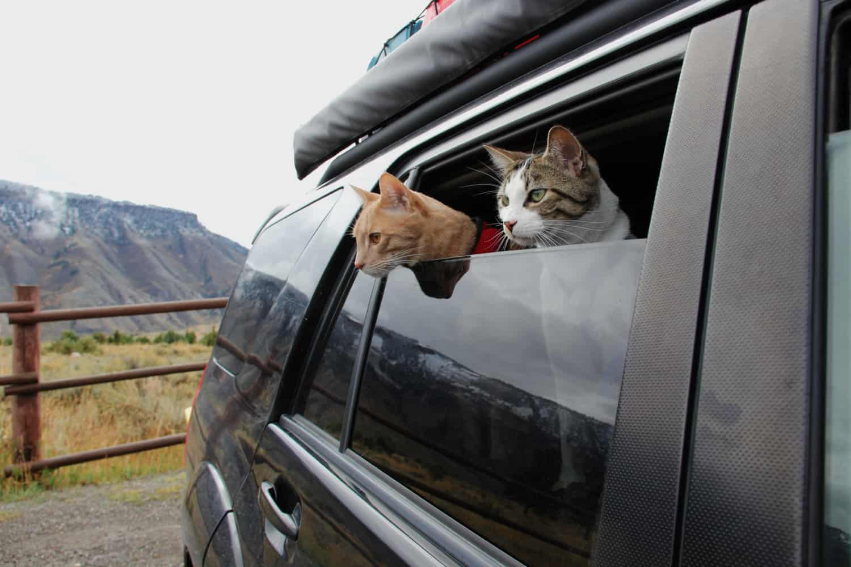 cat-travelling