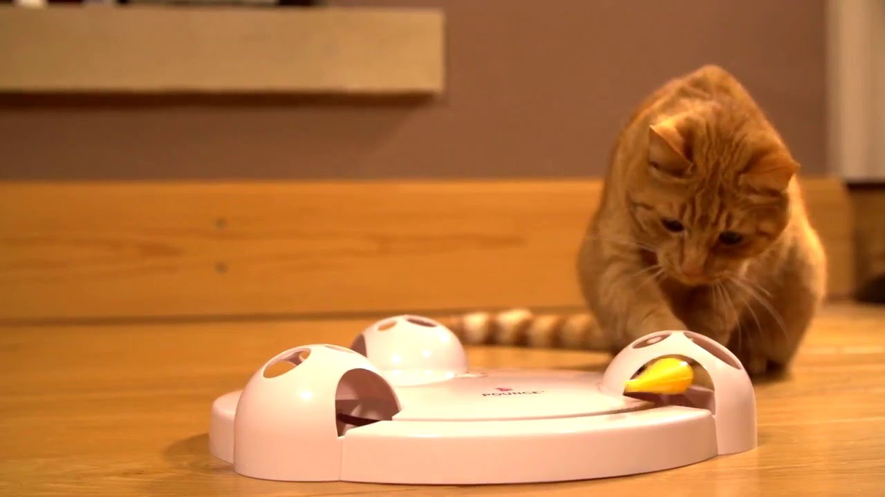 Interactive-Toys-for-cat