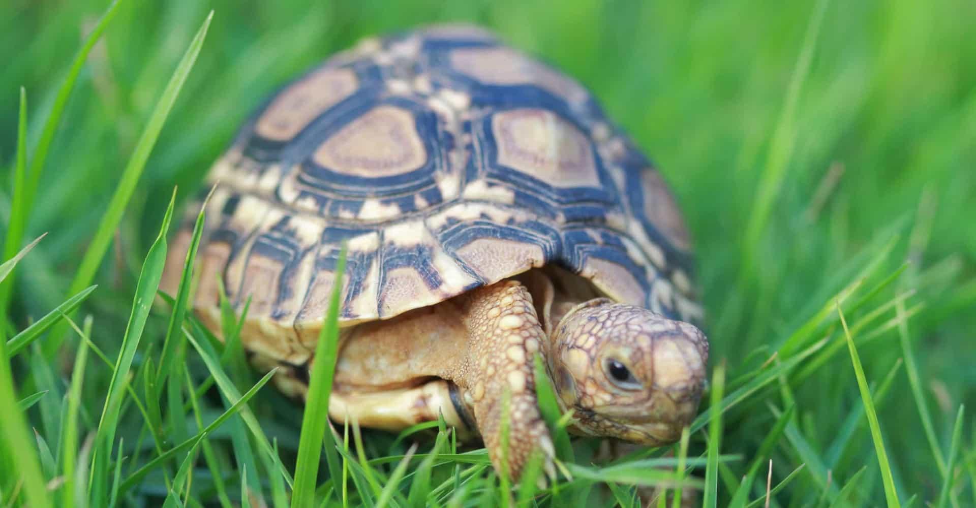 pet-turtles