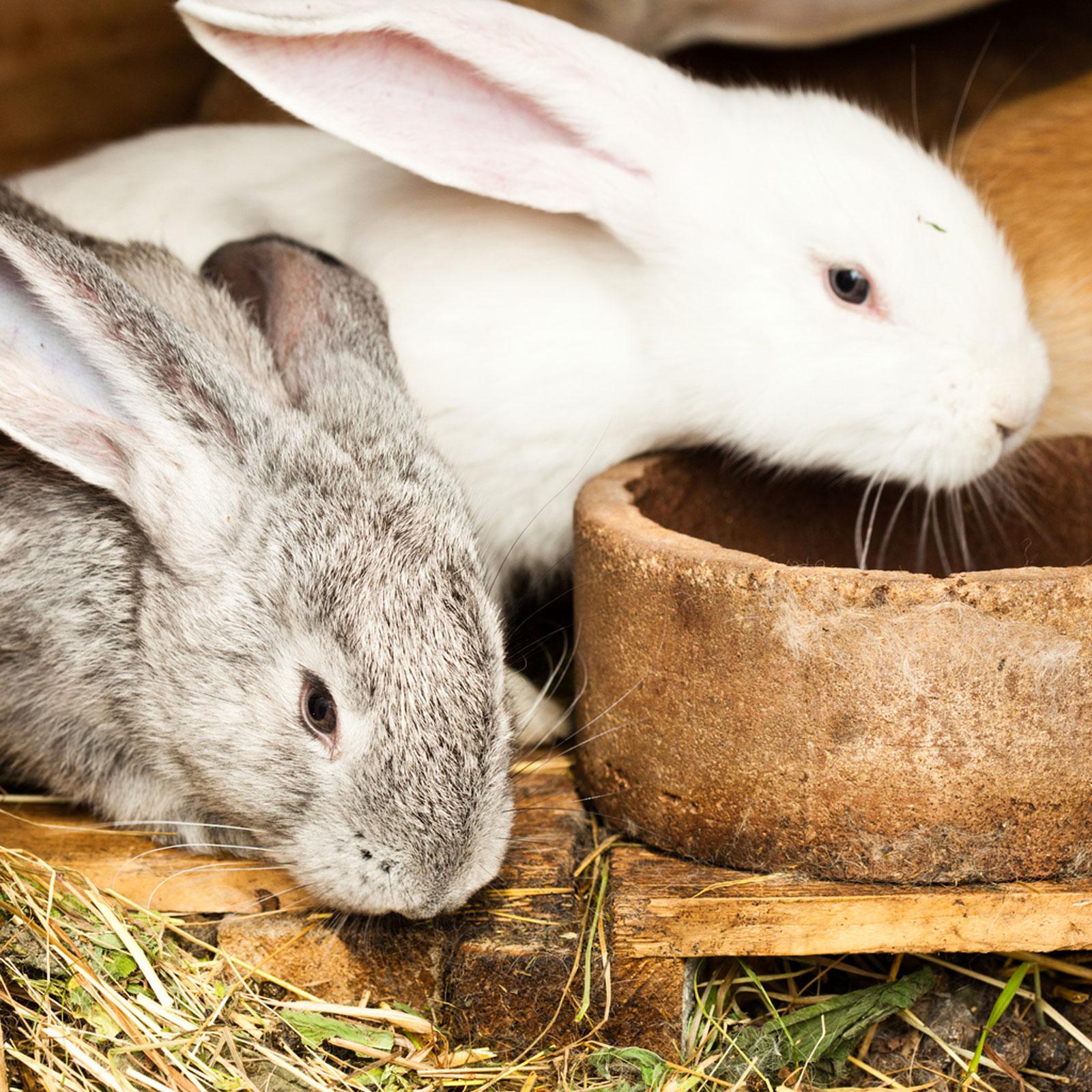 Rabbit-Manure
