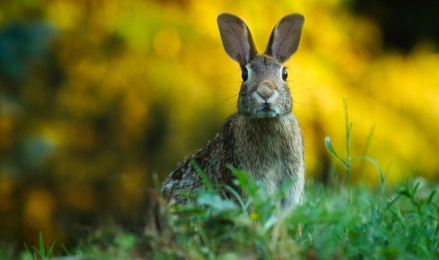 Rabbit-Minerals