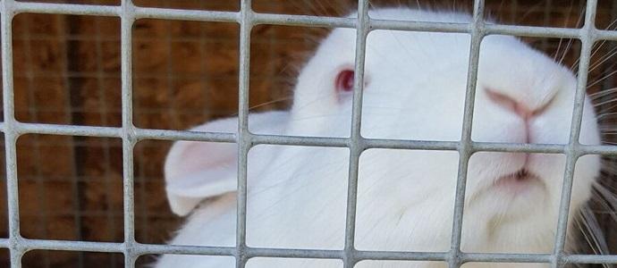 Raising-Rabbits-Feat1