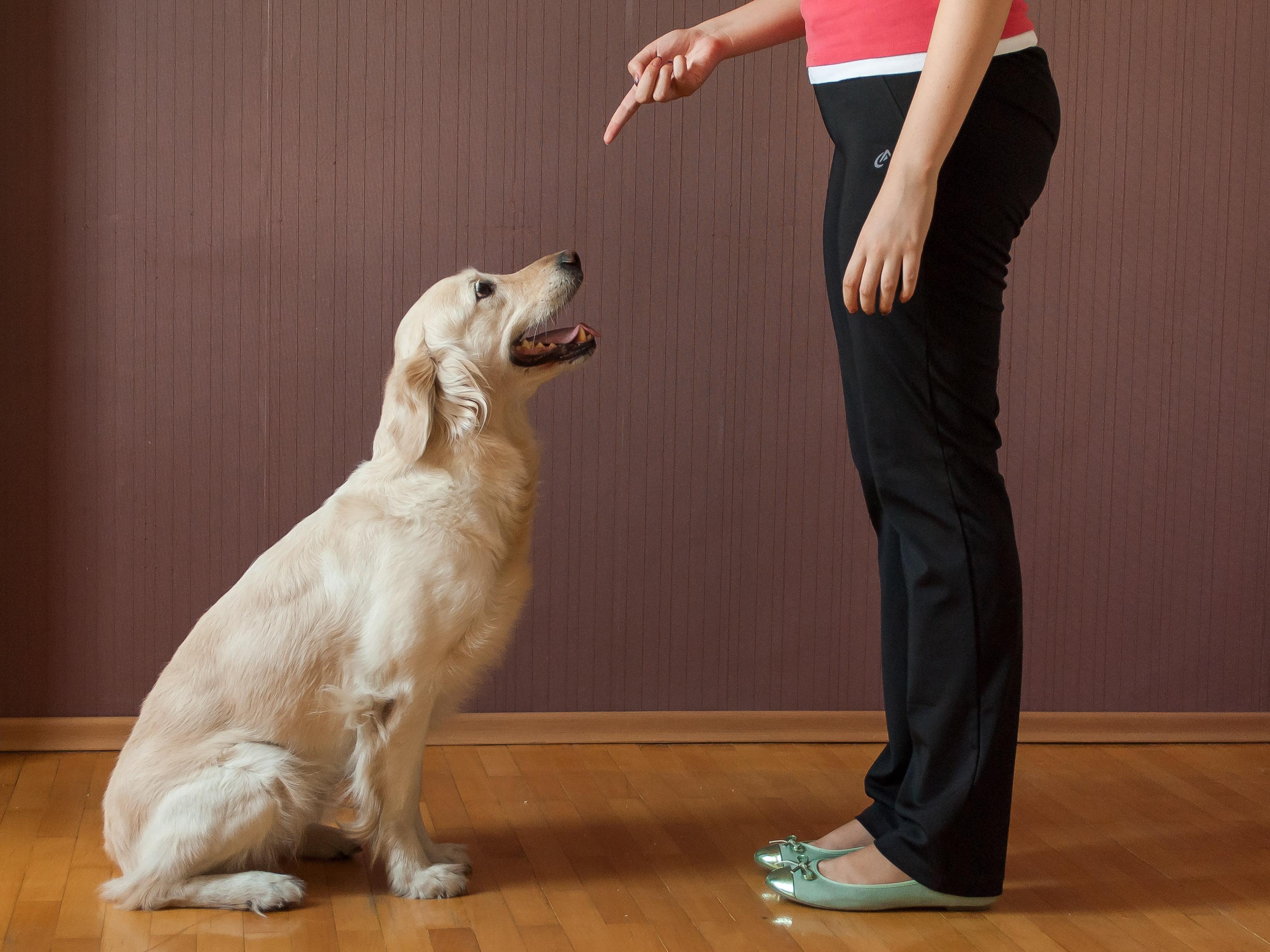 Basic Dog Training Commands: Every Dog Should Know