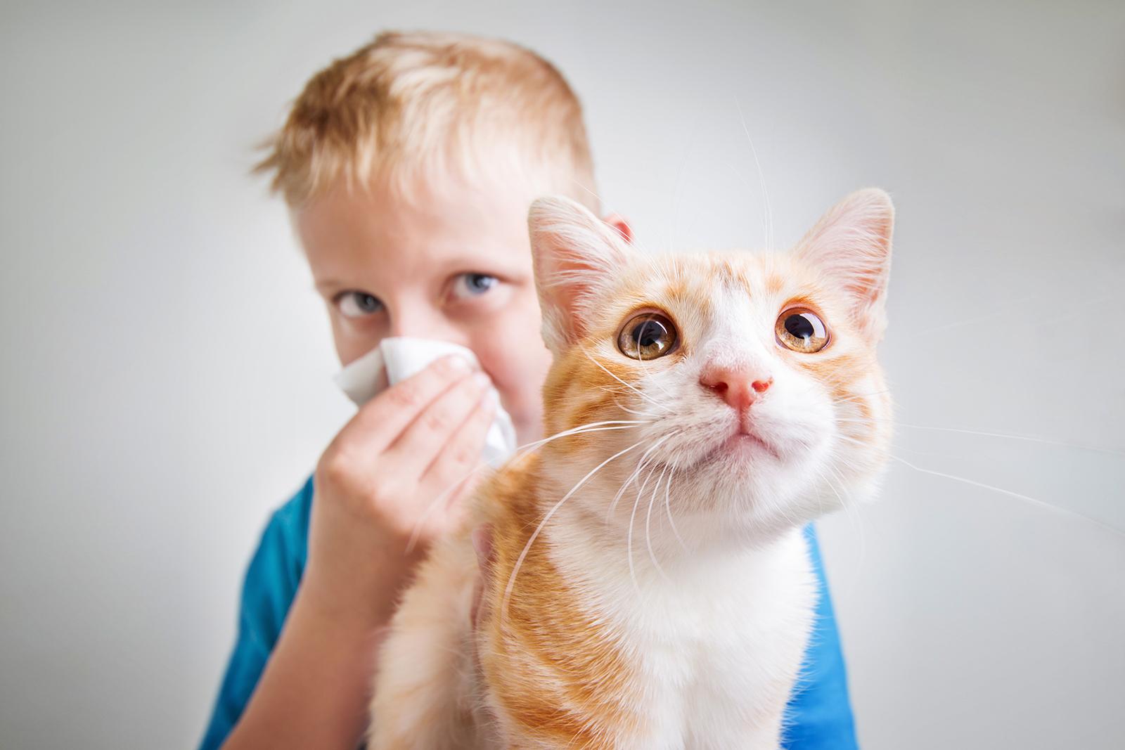 ways-to-avoid-cat-allergy