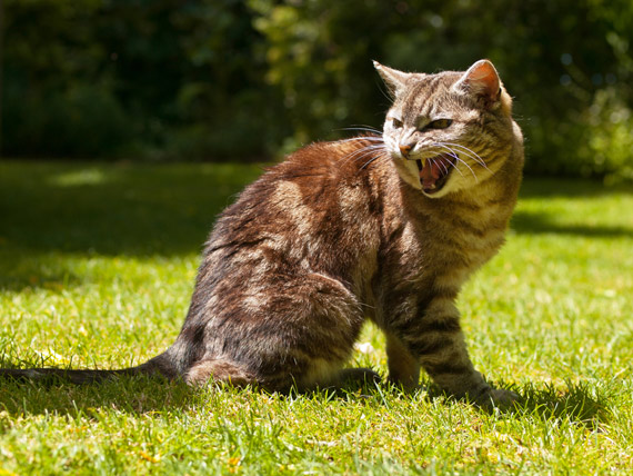 Cat Agression | Dealing With an Aggressive Cat?