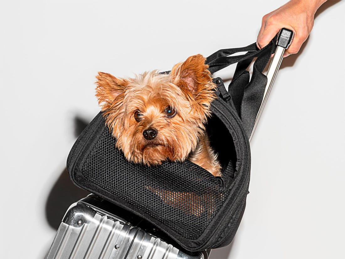 air-travel-with-dogs
