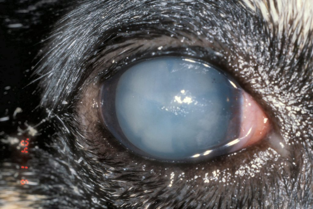 Conjunctivitis-cat-eye-problems