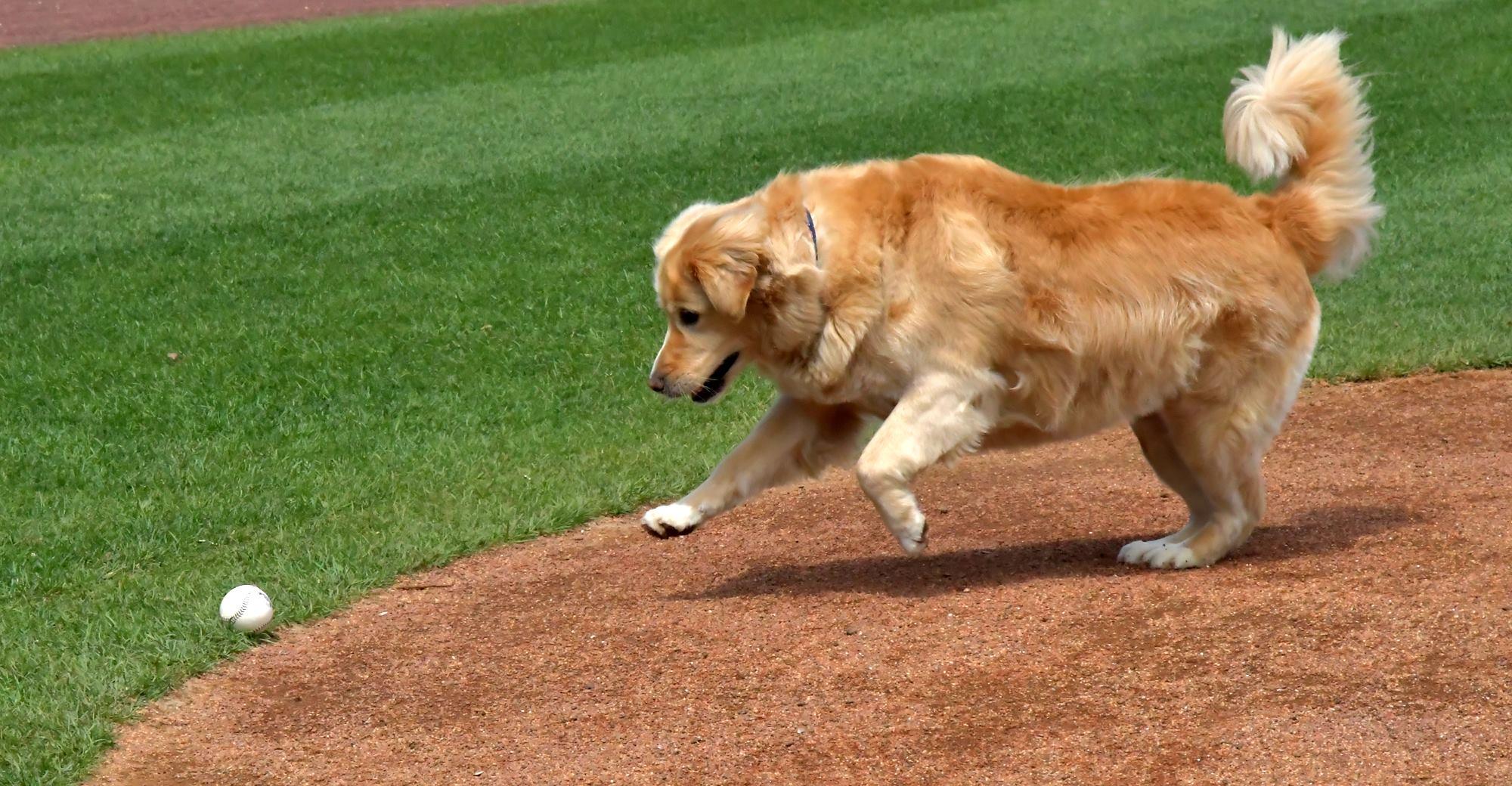 ballpark-for-dogs