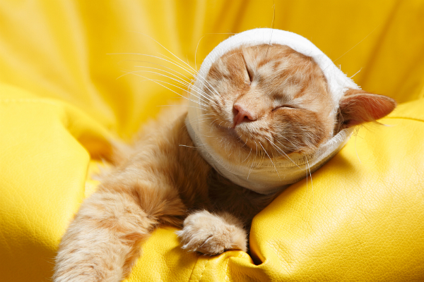 bandage-on-head