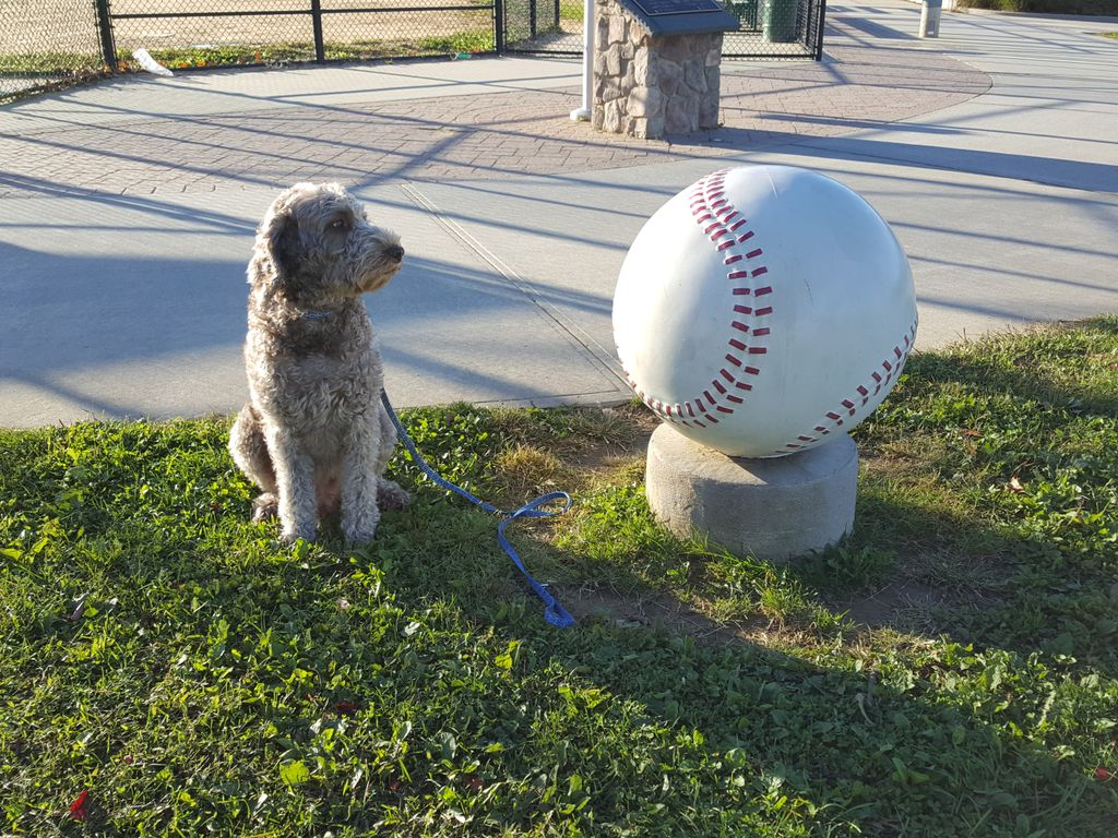 baseball-with-dogs
