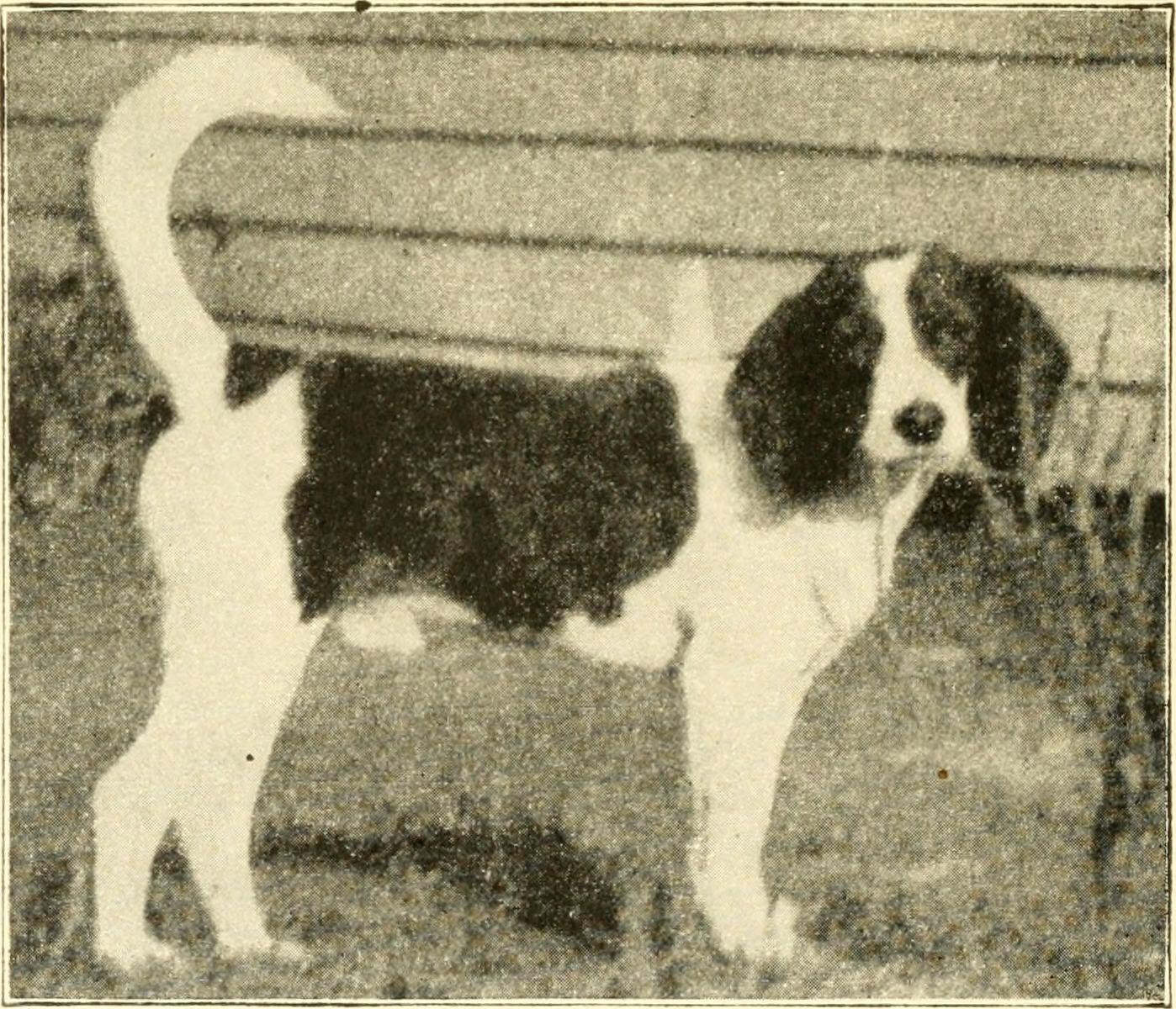 beagle-history