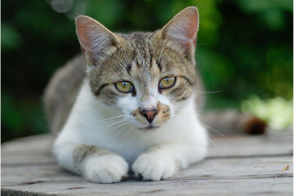 cat-cancer-treatments