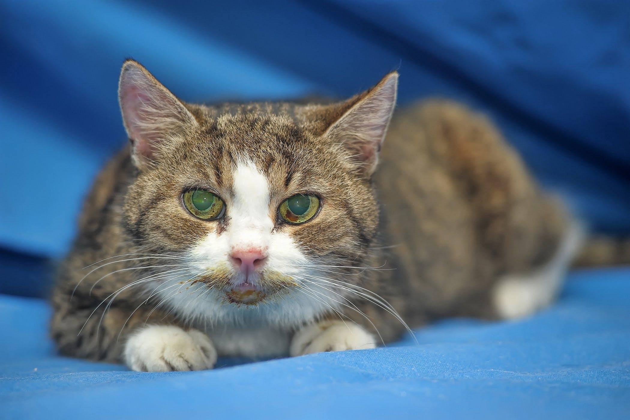 cat-cancer