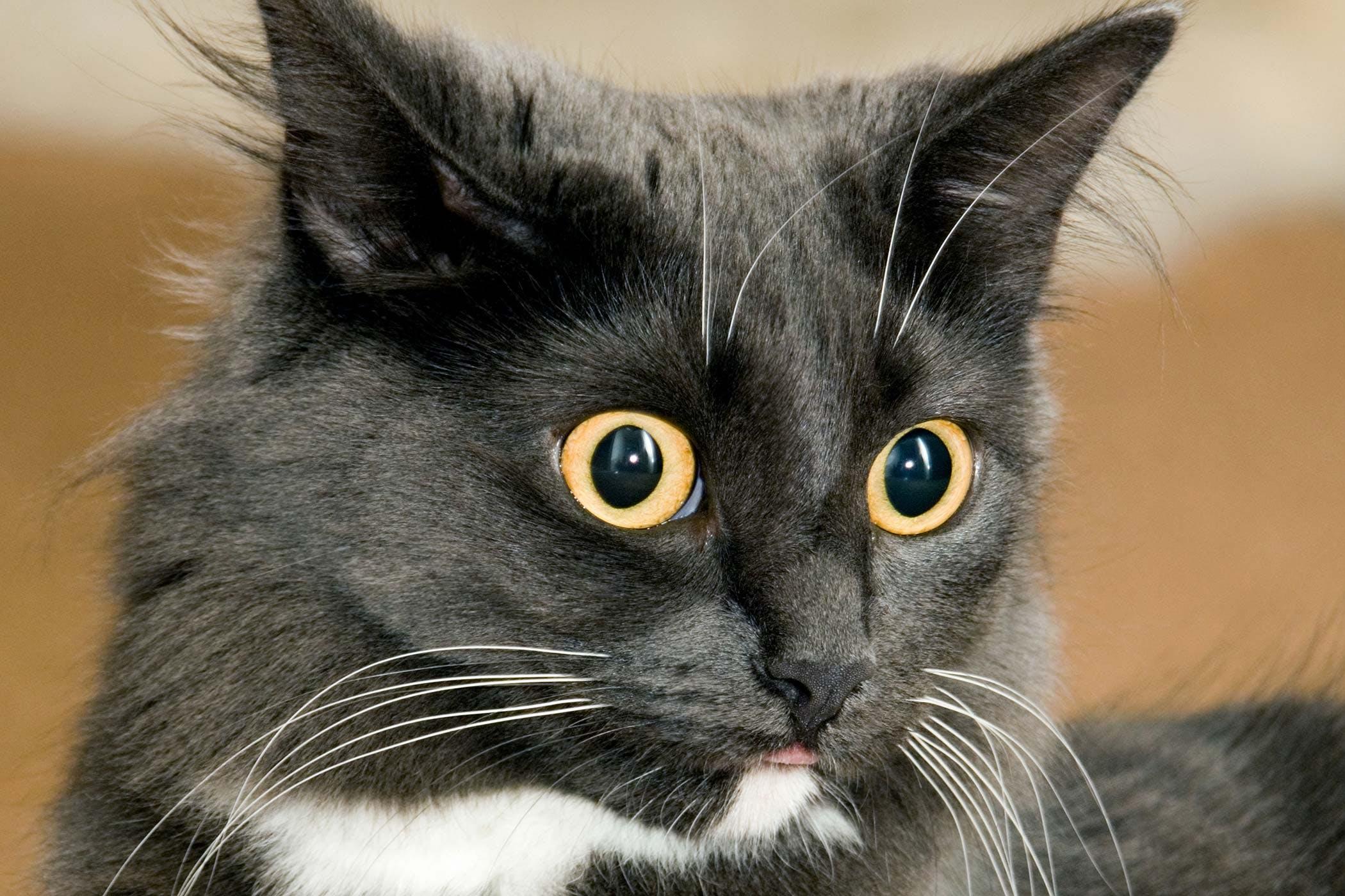 cat-internal-bleeding