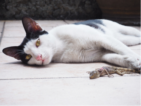 cat-toad-poisoning