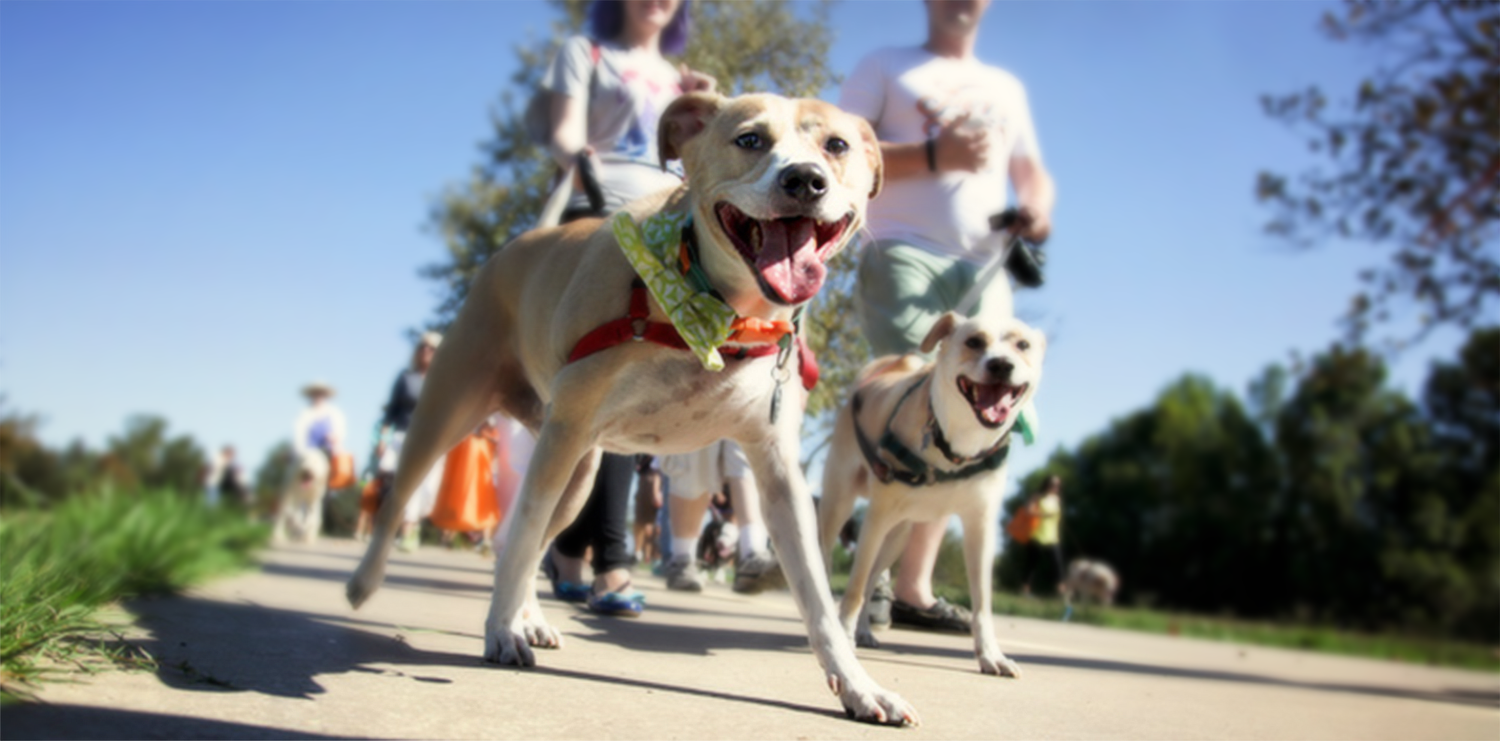 charity- event-for-dog