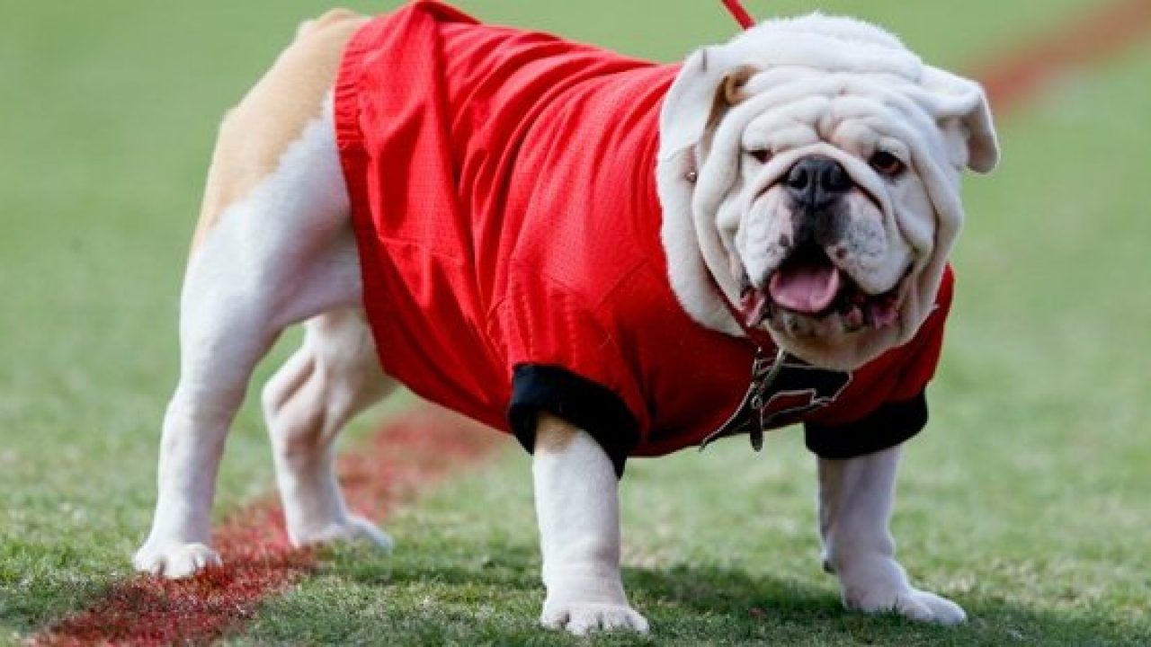 community-colleges-for-dog