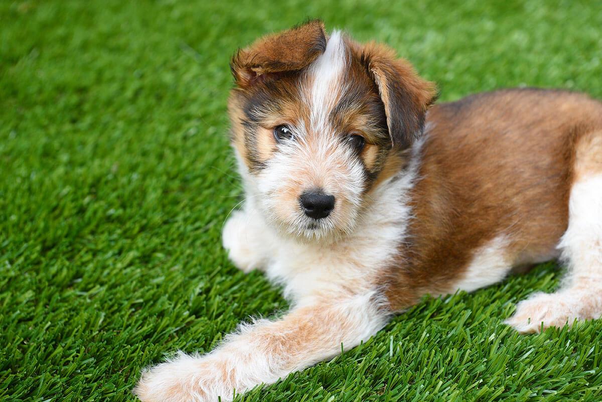 cute-dog-on-turf
