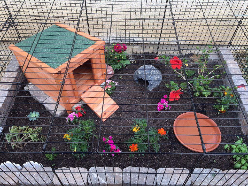 Safety in outdoor tortoise enclosure
