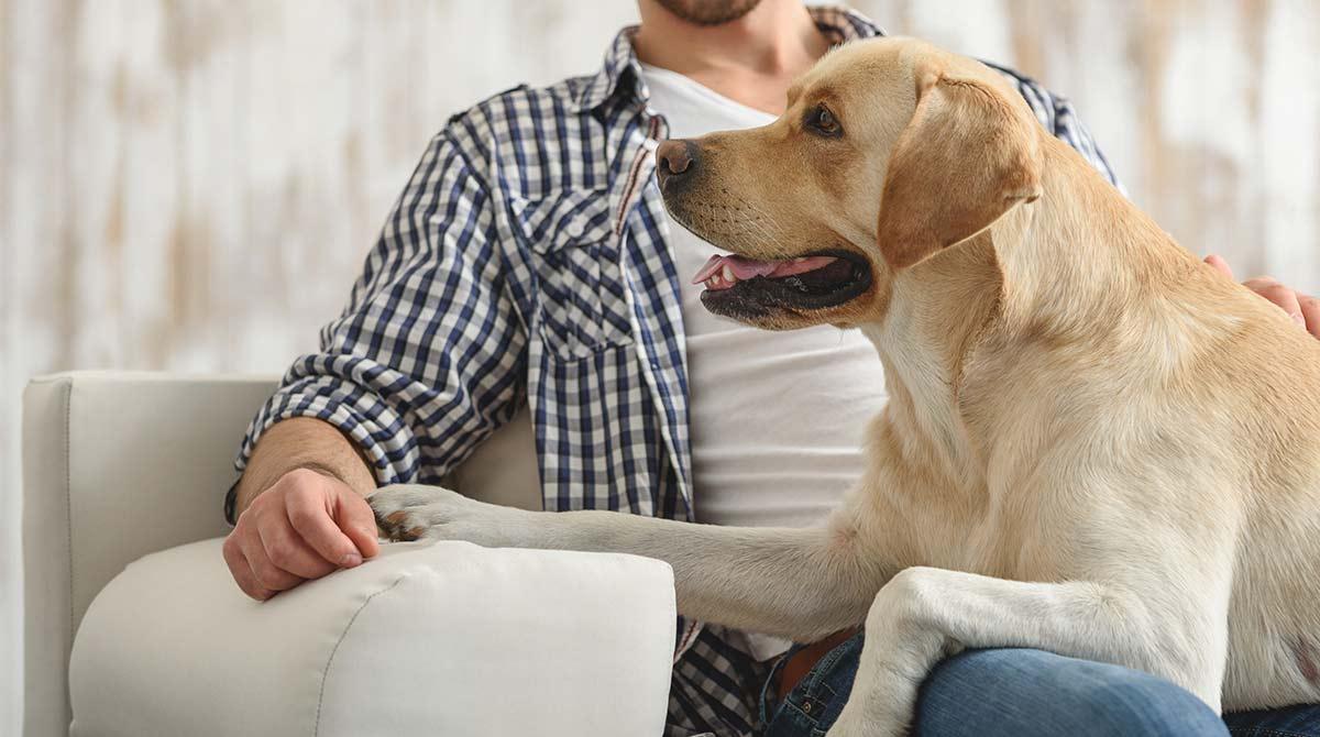dog-begging