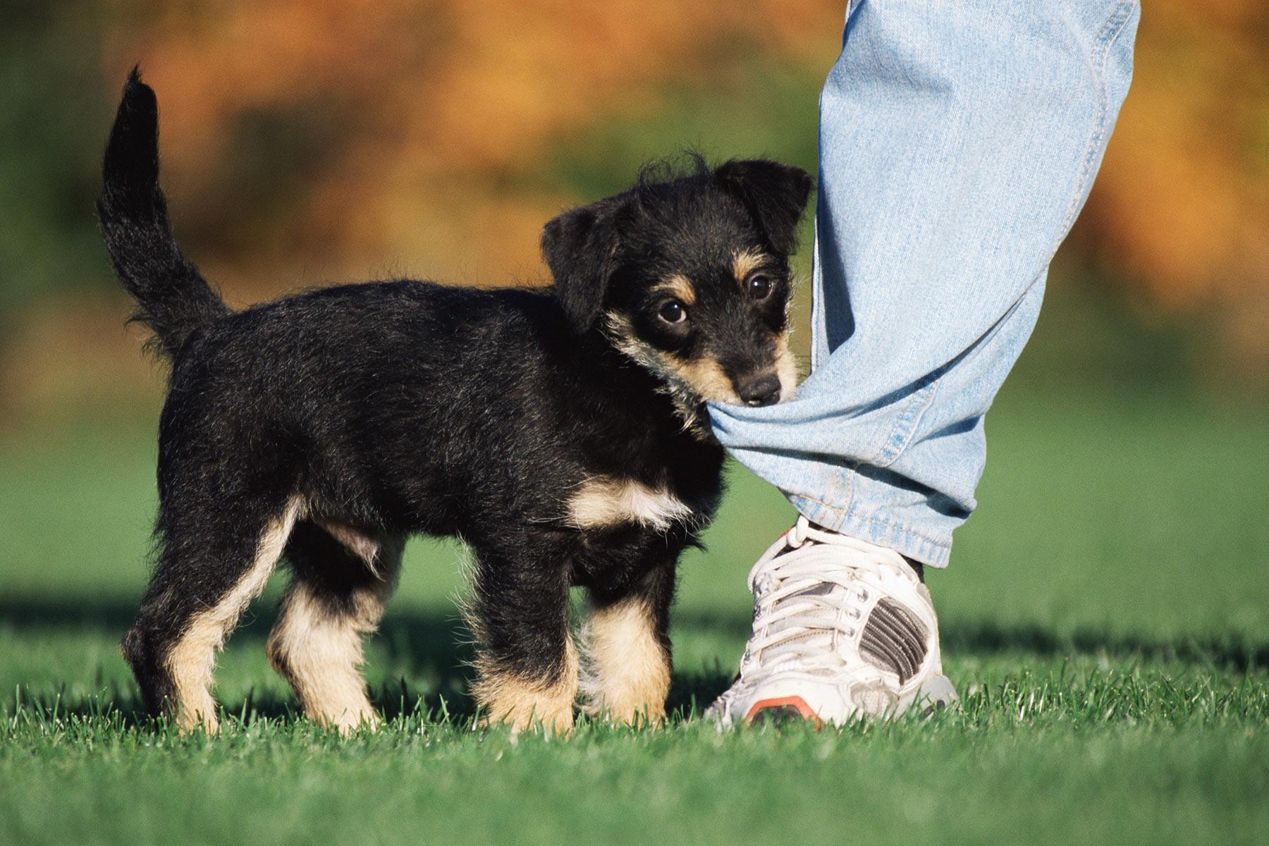 dog-behaviors