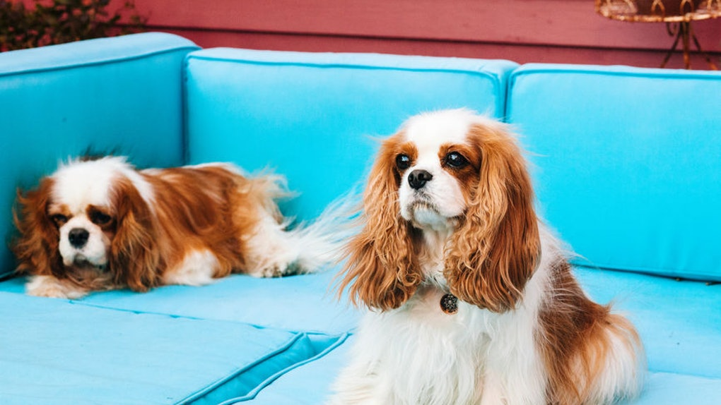 dog-breaking