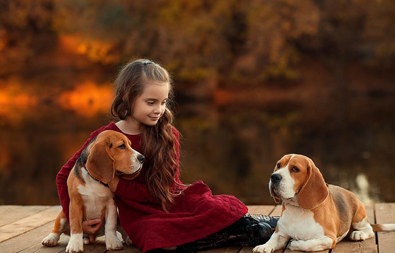 dog-for-family