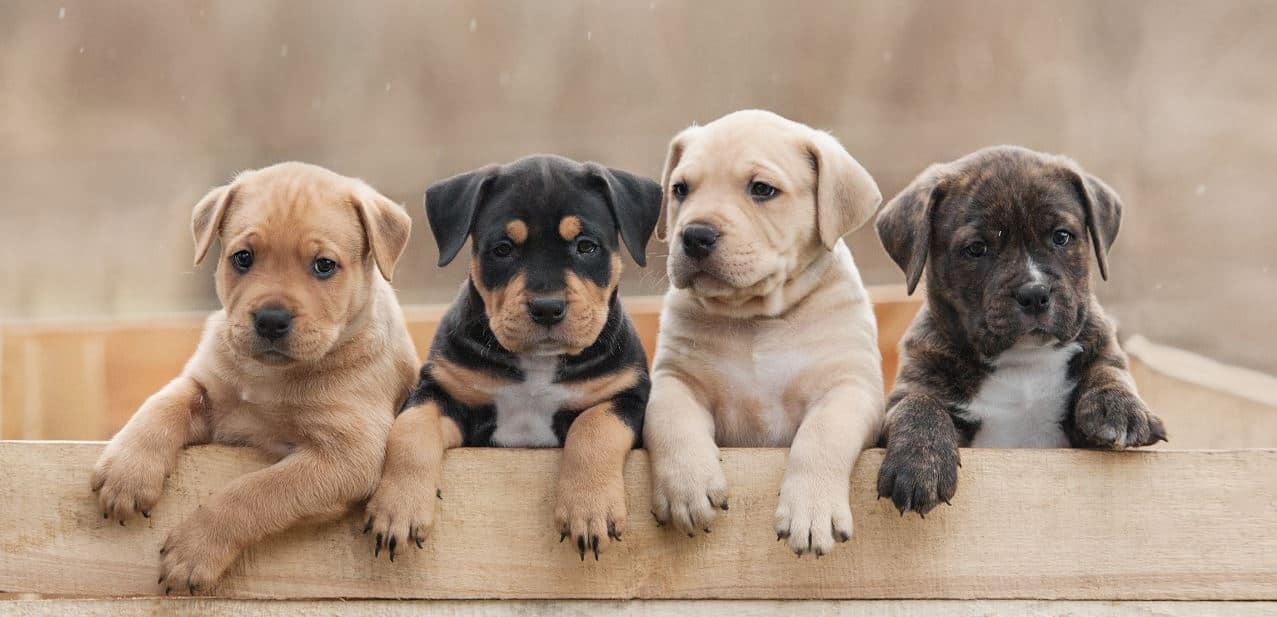 dog-puppy