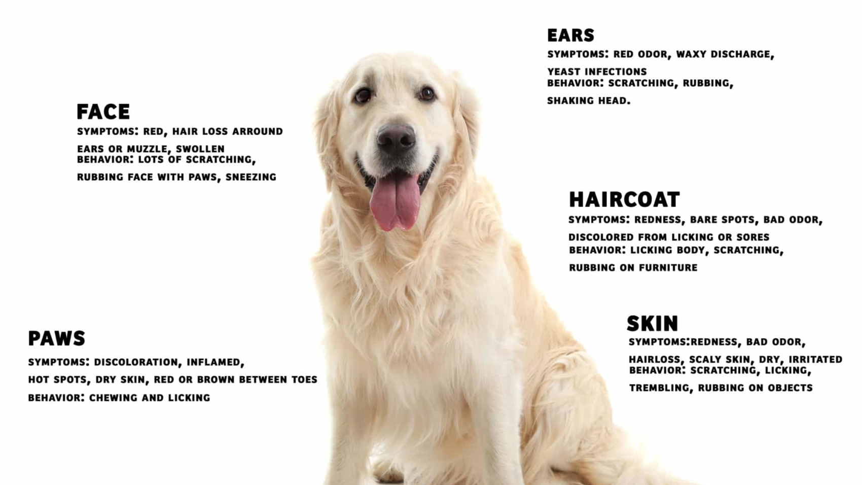 dog-skin-disorders
