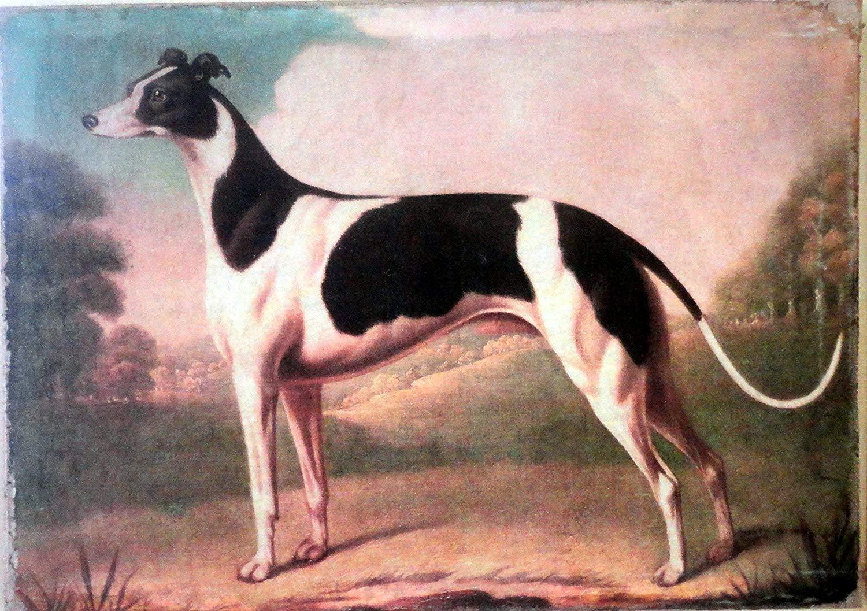 greyhound-dog-history