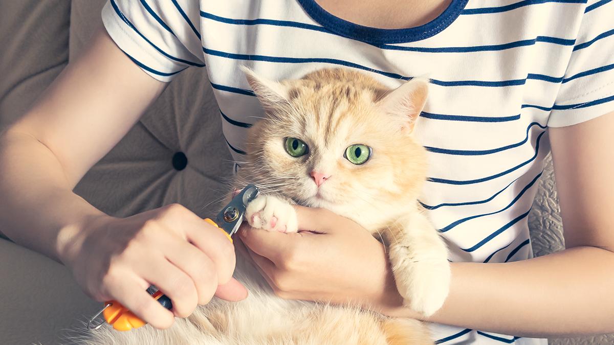 cat-nail