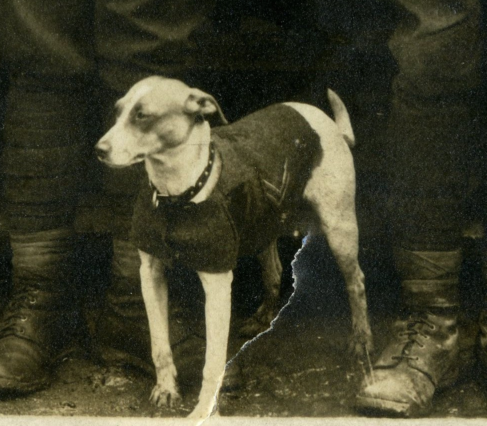 jack-russell-terrier-history