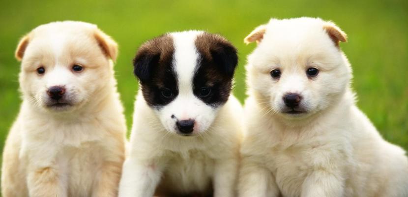 kid-friendly-dogs