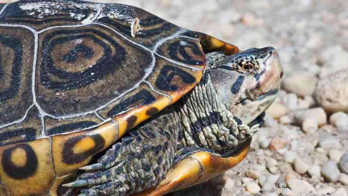 turtle-feed