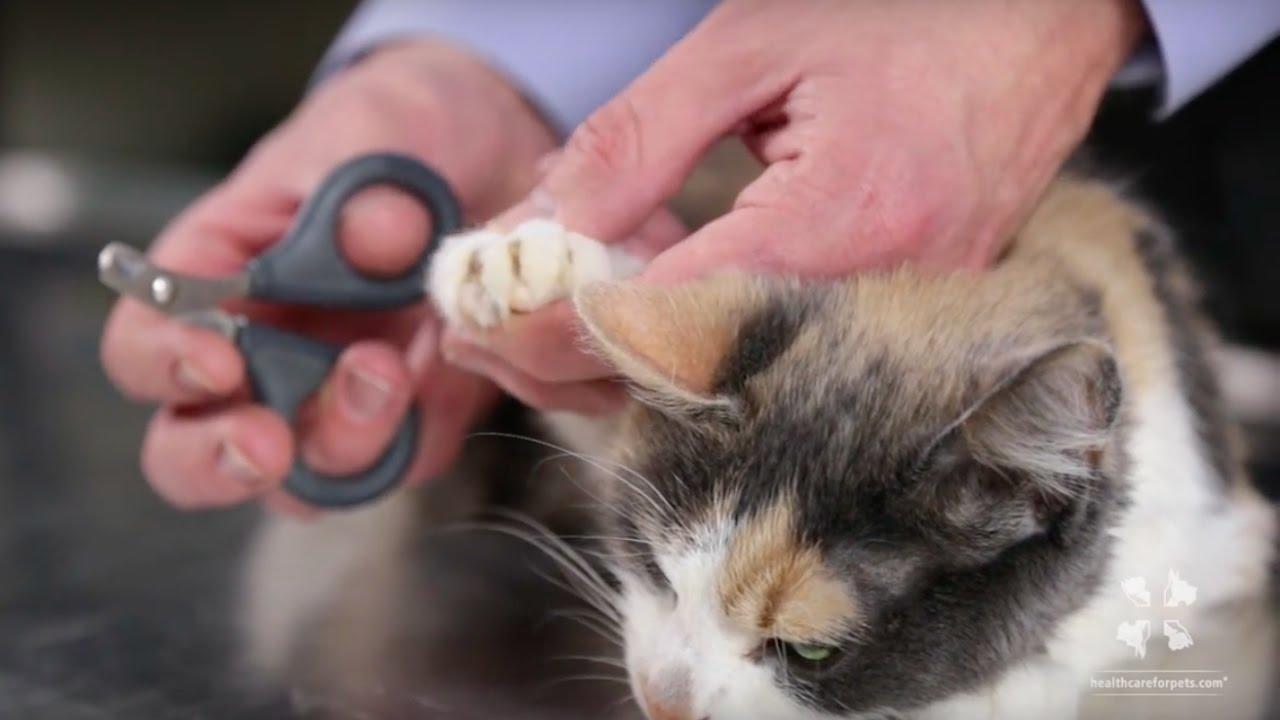 Cat's-Nails