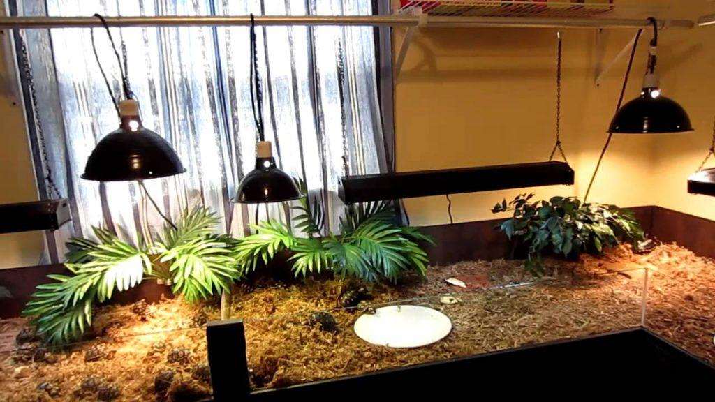 Lighting in outdoor tortoise enclosure