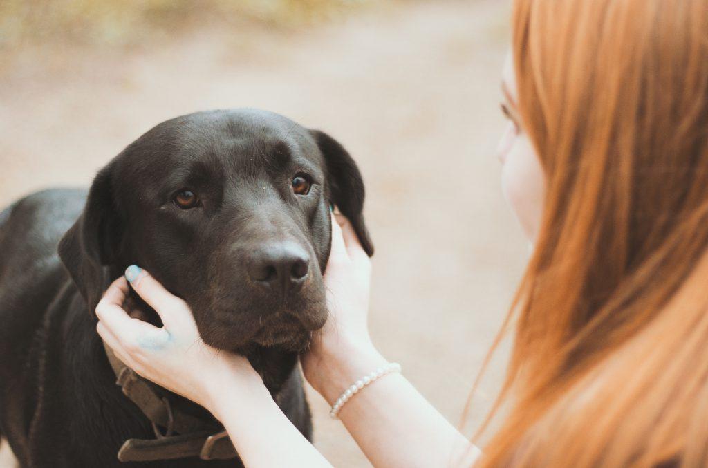 Fearful Behaviors in Dogs